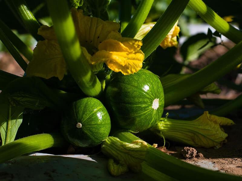 Salvita Alimentos • Agropecuaria