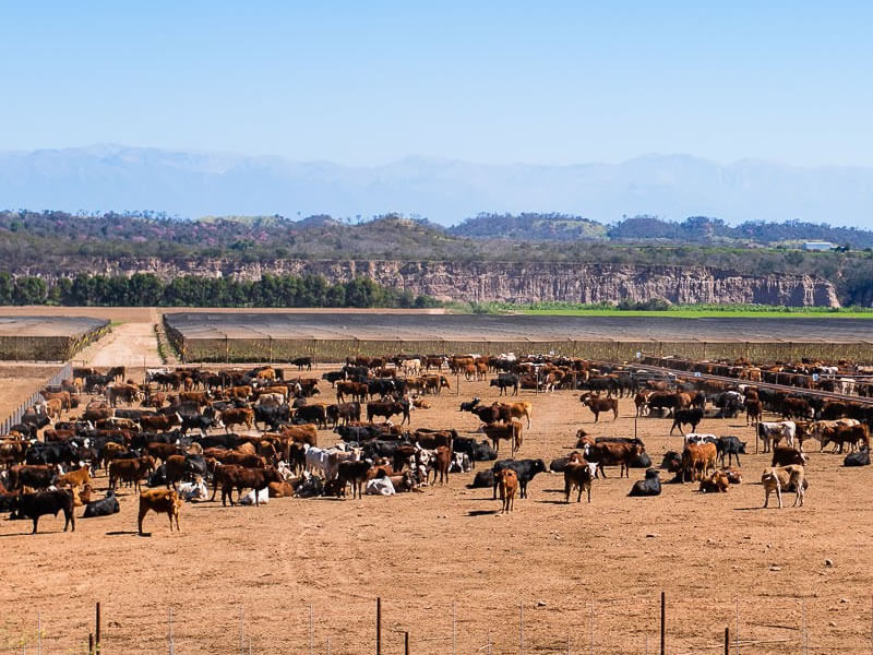Salvita Alimentos • Cattle Raising