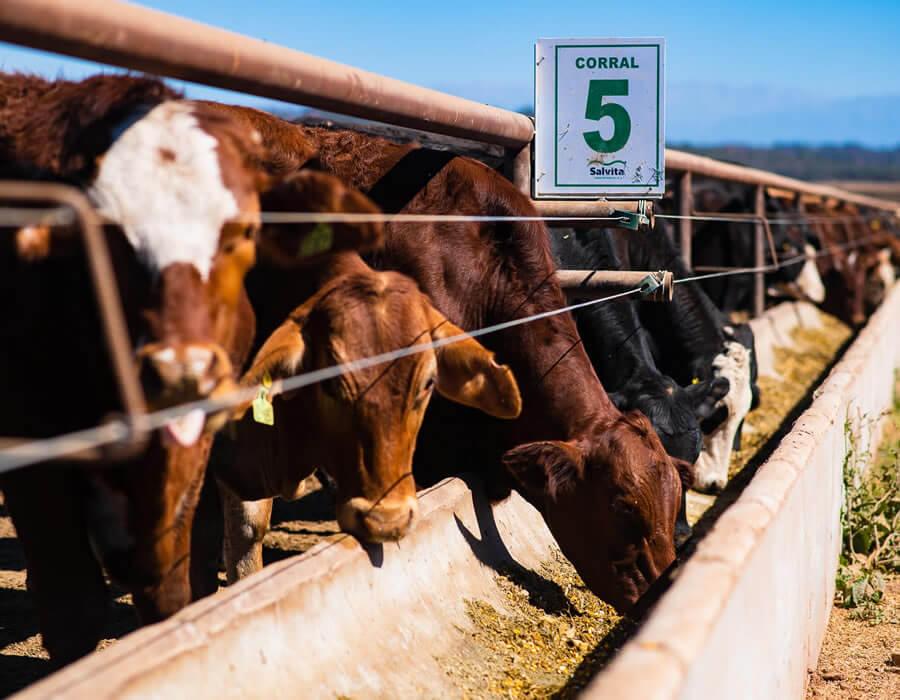 Salvita Alimentos • Cattle Raising