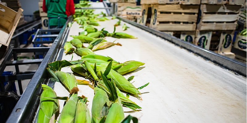 Salvita Alimentos • Fresh Vegetables Packing Plant