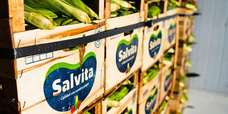 Salvita • Planta de hortalizas
