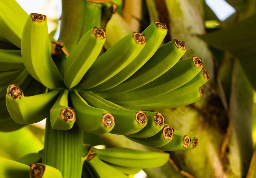 Salvita Alimentos • Los hermanos que invirtieron US$6 millones para competir con las bananas del exterior